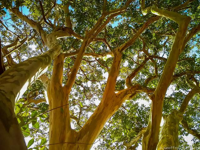 Arborescences V