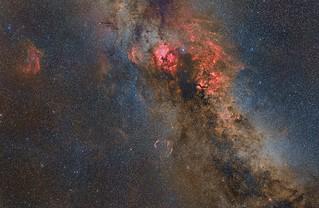 Cygnus | by manuelj.g