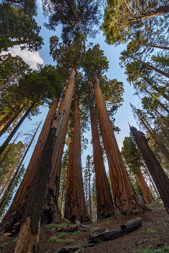 Sequoia National Park   by RuggyBearLA