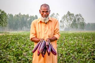 Bt brinjal farmer Afzal Hossain from Bangladesh_Arif Hossain