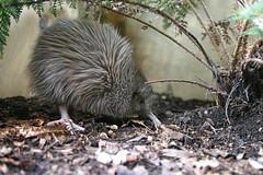 Queenstown: Kiwi Birdlife Park