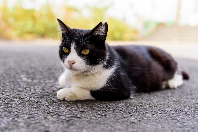 Stray cat lives at Ogimachi Station : 扇町駅で暮らす猫