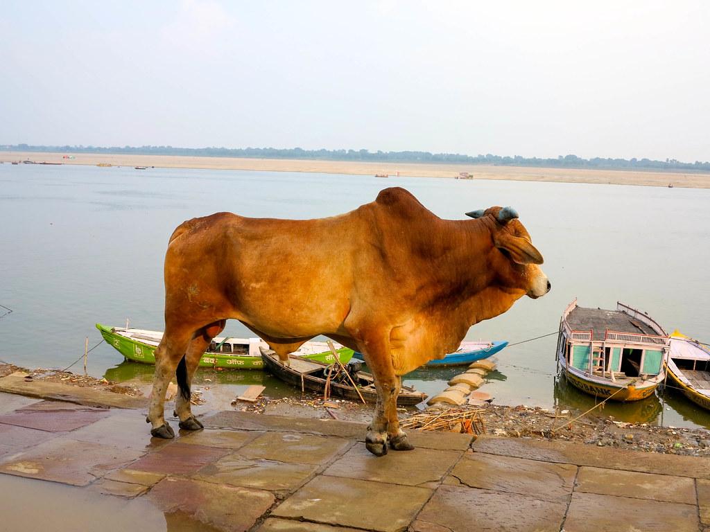 Paseo por los ghats