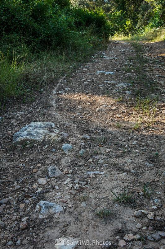 Camino de hormigas en un camino