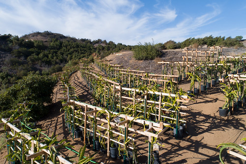Aguila Farm in Fallbrook, California