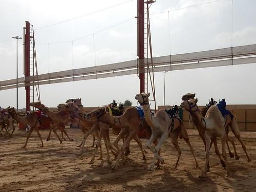Al Marmoom Camel Racing Track - 11