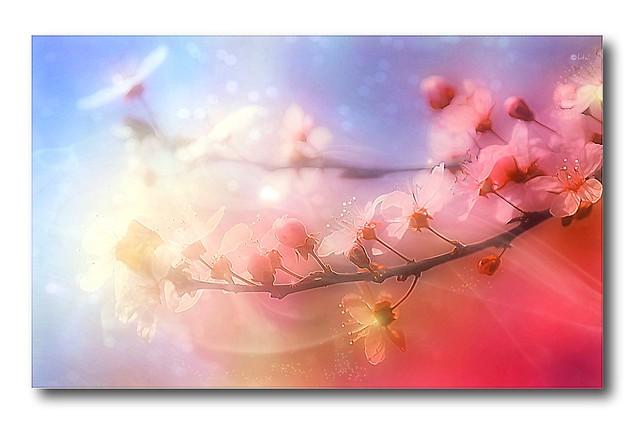 Rainbow blossoms