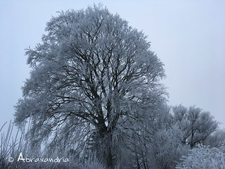 frost2 | by abraxandria
