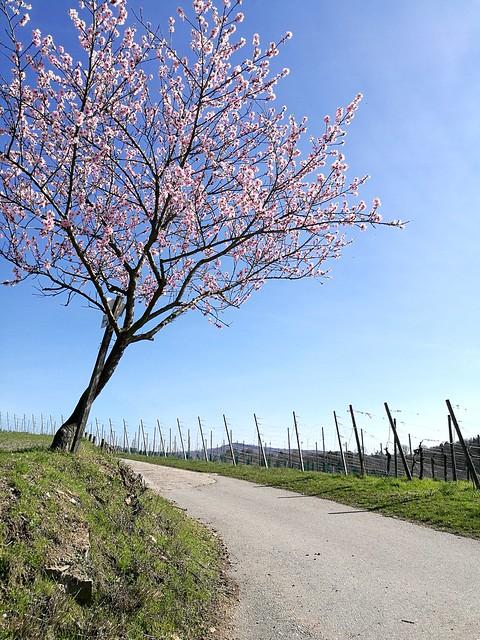 Frühling an der Bergstraße