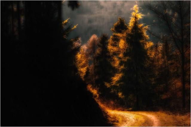 Wald Rock'n'Roll