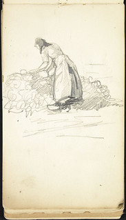 Woman tending to a harvest of turnips, Belgium /   Paysanne récoltant des navets en Belgique