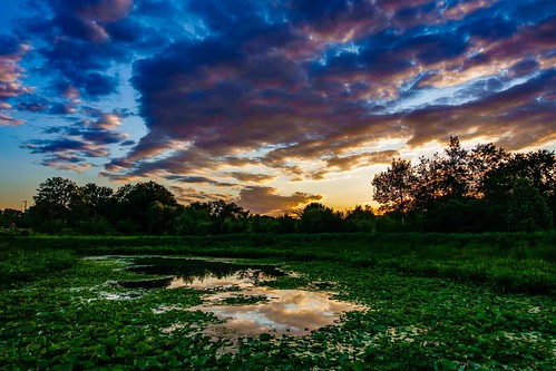 boston clouds colors massachusetts lilypond sky sunset cambridge reflection colorful alewifebrookreservation timelapse video playmemoriestimelapseapp