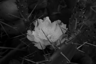 _DSC0331 | by manikandan.sampath