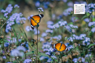 Free download July 2019 Wallpaper Calendar Plain Tiger Butterfly