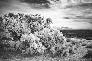 Canyonlands Infrared | by jordan.dickinson.and
