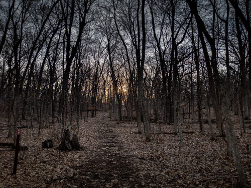 trees usa foxriverpark landscape march forest wisconsin sunrise unitedstates waukesha spring 2019 unitedstatesofamerica us