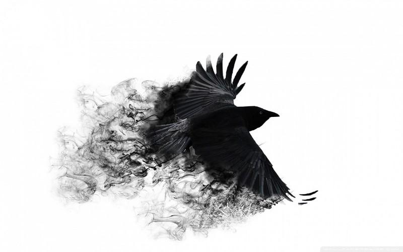 Обои ворона, крылья, птица, взмах картинки на рабочий стол, фото скачать бесплатно