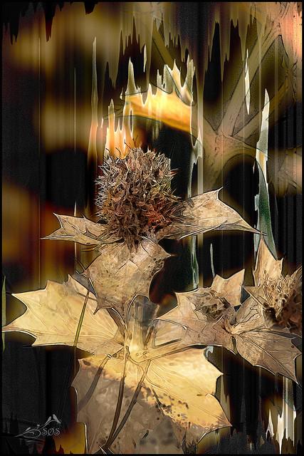 IMG_0821 Plant artistic