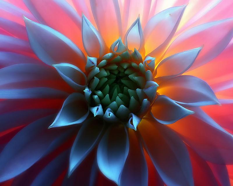 Обои цветок, макро, свет, серединка картинки на рабочий стол, раздел цветы - скачать