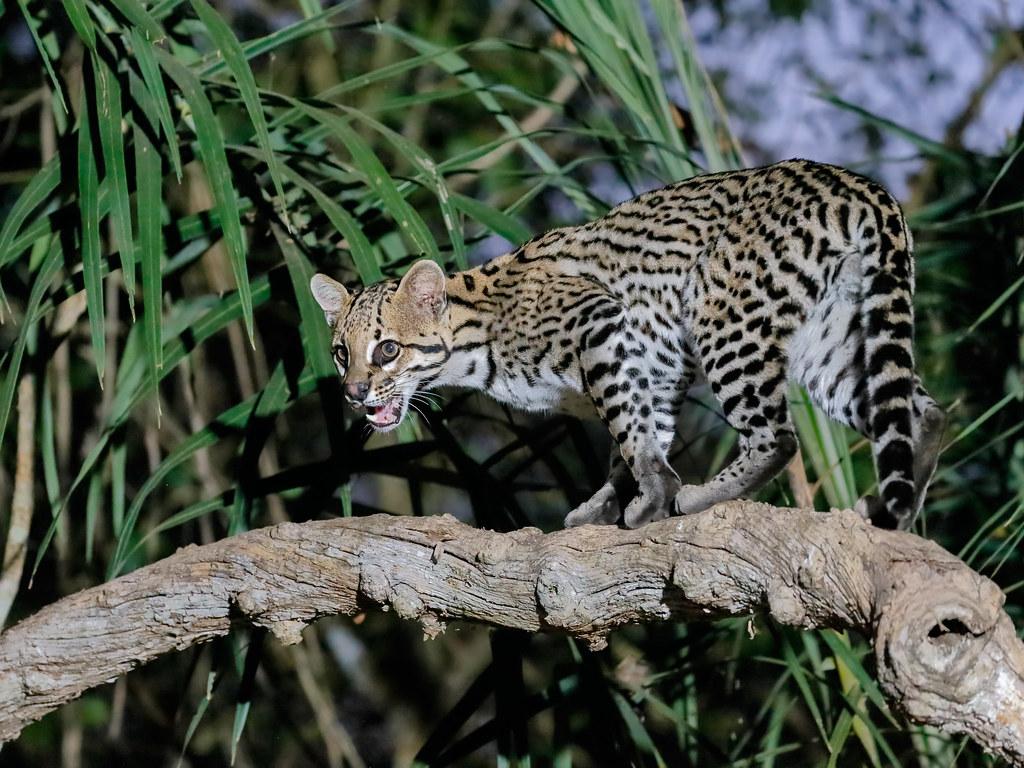 Pantanal_1307