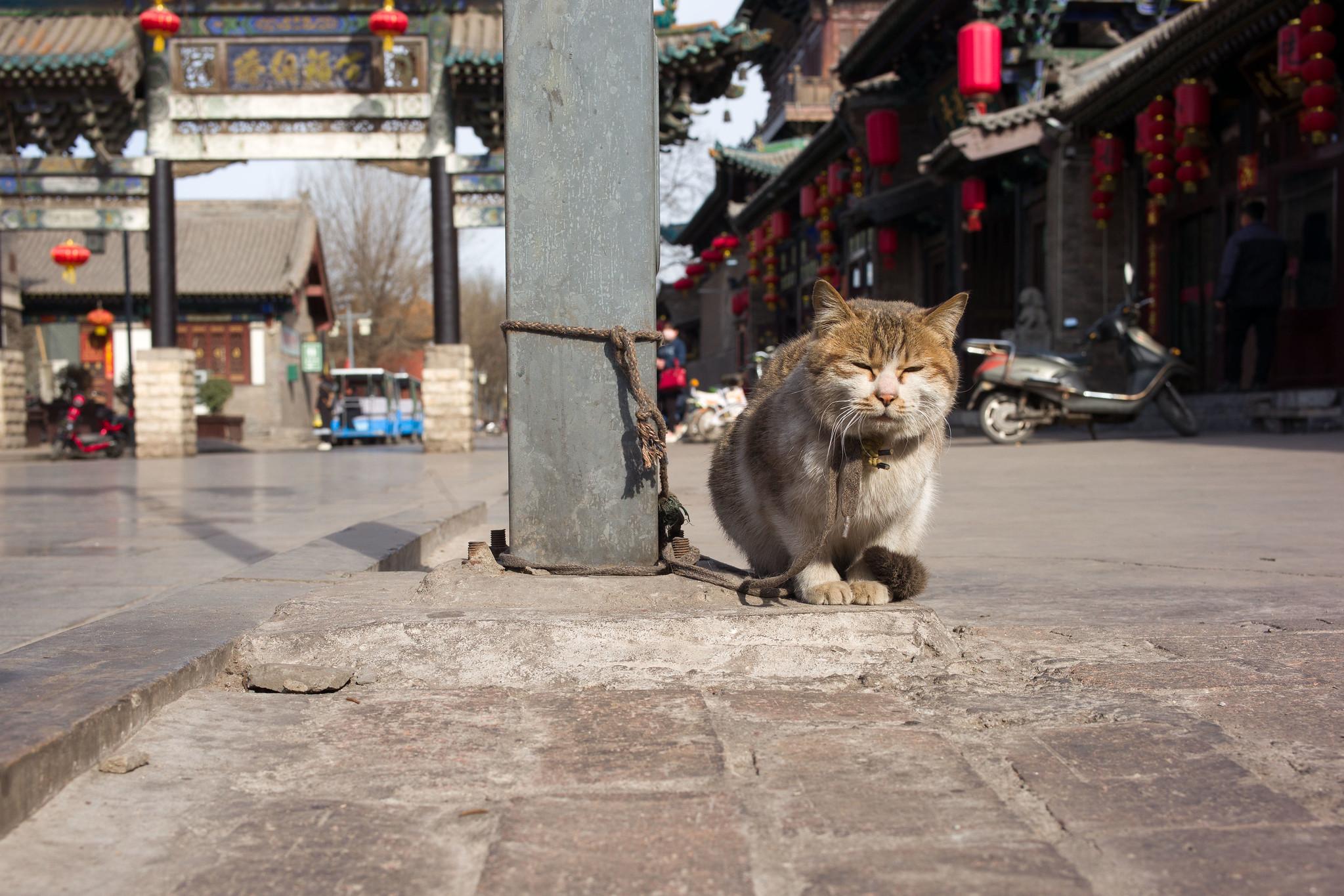 Sonnenbadende Katze in Pingyao