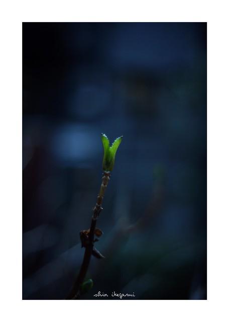 2019/2/23 - 21/21 END. photo by shin ikegami. - SONY ILCE‑7M2 / Voigtlander NOKTON CLASSIC 40mm f1.4 SC VM