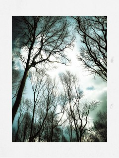 Day 104 Walk in the woods | by Clare Pickett