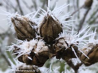 frost7 | by abraxandria