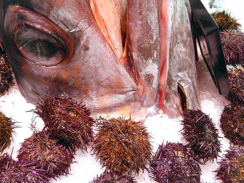 Sea urchins and fish heads for sale at Mercado San Miguel in Madrid, Spain