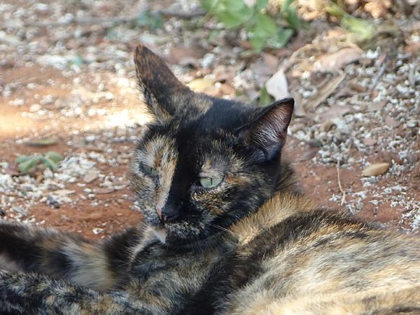 chat inversé