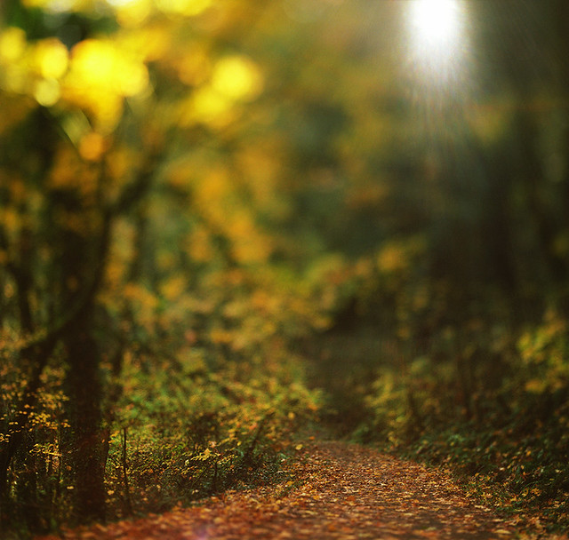 From that time when autumn walks were but a prelude to winter hikes