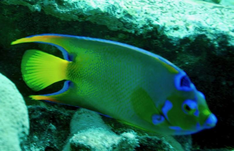 Aruba scuba shots videos 368