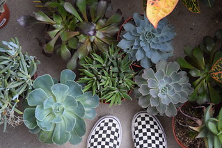 Succulents | by SouthwoodTulsaOK