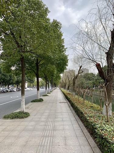 china changzhou trees spring