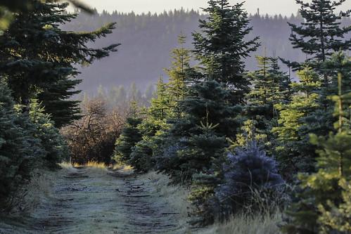 2018 winter december christmasday camino eldorado canon 7d canon7dmarkii tamron tamron150600mm foothills sierra sierranevada carsonroad