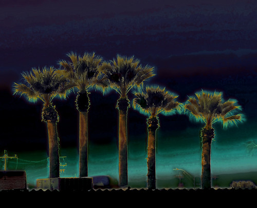 palmtrees photomanipulation songtwilighttimetheplatters