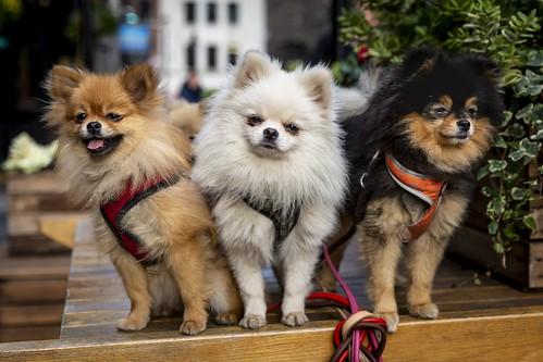 Three Little Dogs | by Leanne Boulton