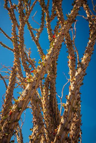 Desert Buds | by Wayne Stadler Photography