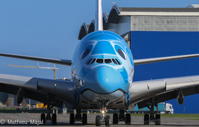 Face to face with turtle / All Nippon Airways