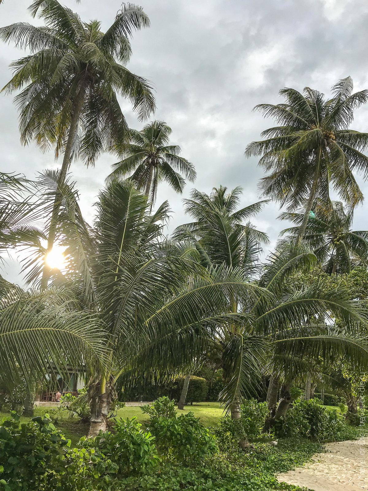 Coconut-Island-Phuket-iphone-0611