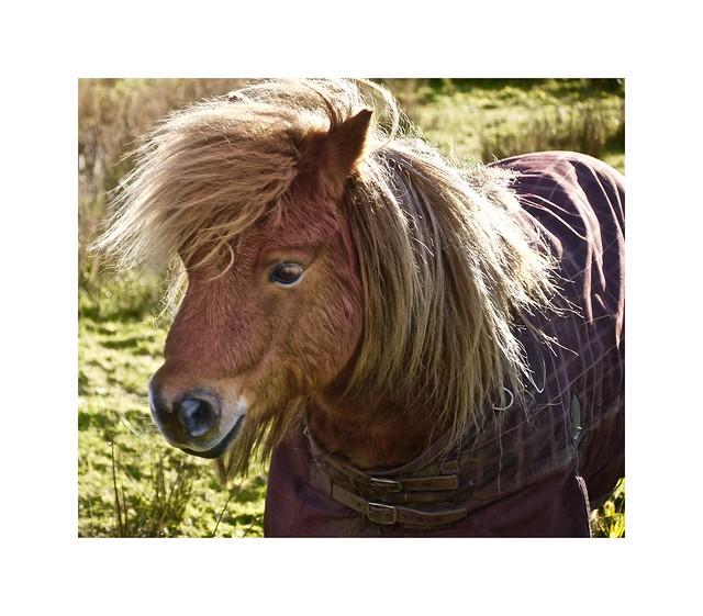 Full equine jacket!