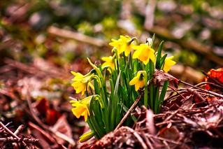 Flower Spring Bokeh - 10. März 2019 - Tarbek - Schleswig-Holstein - Deutschland   by torstenbehrens