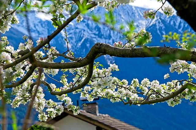 Spring Branch, Telfs, Tirol