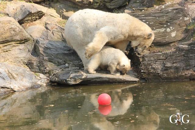 Besuch Tierpark Friedrichsfelde 06.04.201991