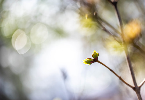 Budding Spring | by cmctaggs