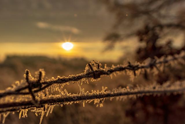 Last Frost ?