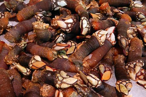 Gooseneck barnacles for sale at Mercado San Miguel in Madrid, Spain