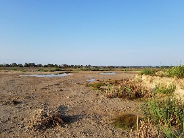 Heritage River Road Wetlands. Jacksonville,  FL.