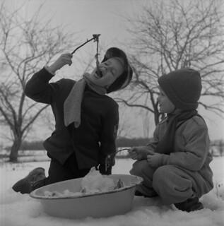 Children eating maple syrup taffy, Québec / Enfants dégustant de la tire d'érable (Québec)