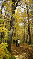 Парк в золоте)
